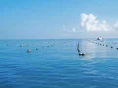 海水珍珠养殖的条件和海水珍珠的形成时间及海水珍珠怎么分等级?