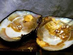 各种珍珠种类包括珍珠贝和淡水海水珍珠种类及南洋珠日本珠黑珍珠种类